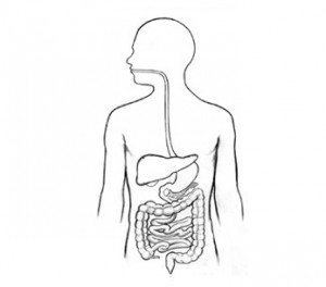 Digestive-tract