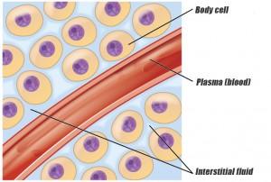 body-cells
